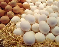 14 рецептов лучших масок для волос с яйцом